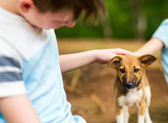 10 Ways Pets Help Benefit The Lives of Kids