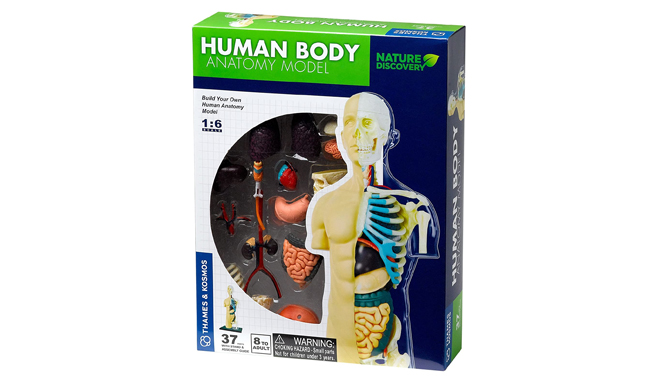 Thames & Kosmos Anatomy Model